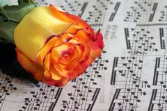 Rose on notes Royalty Free Stock Photography