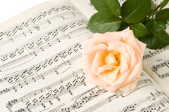 The rose on notes Royalty Free Stock Photo