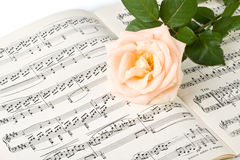 The rose on notes. The rose laying on a musical notes on a white background Royalty Free Stock Photography