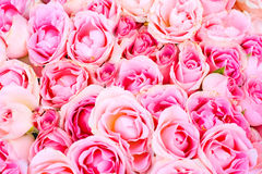 Rose nuziali Wedding da Fotografia Stock