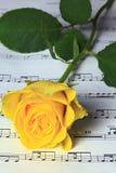 Rose och musik Royaltyfri Bild