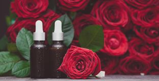 Rose oil, Bottles and fresh flower and leaves on a natural background, bio, organic. Nature cosmetics concept royalty free stock photos