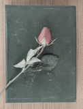 Rose and old book Royalty Free Stock Photo