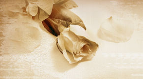 Rose on old  paper. Rose on old brown paper background Stock Photo