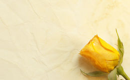 Rose on the old paper background Royalty Free Stock Photos