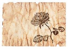 Rose on old paper Royalty Free Stock Images