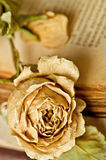 Rose on old sheet of paper Royalty Free Stock Photos
