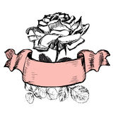 Rose with old styled ribbon. Isolated rose with old styled ribbon Stock Photography
