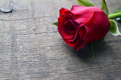 Rose on old wooden background for Valentine`s Day with copy space.Valentine rose. royalty free stock photos