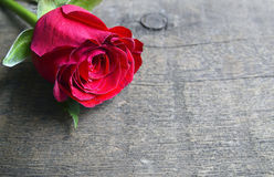 Rose on old wooden background for Valentine`s Day with copy space.Valentine rose. stock image