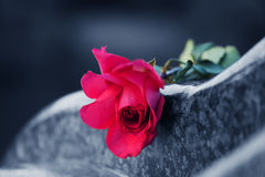 Free Rose On The Tombstone Stock Photos - 19147383