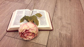 Rose on the open Bible against the gray boards. On an open Bible lies a delicate pink rose as a bookmark on the grey wooden floor Stock Images