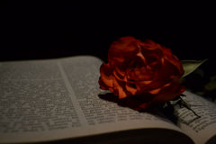 A rose and an open book Stock Image