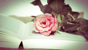Rose with open Book Stock Photo