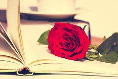 Rose with open Book Stock Photos