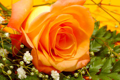 Rose orange photo libre de droits
