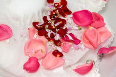 Rose and other flower petals Royalty Free Stock Photography