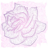 Rose Outline Photo stock