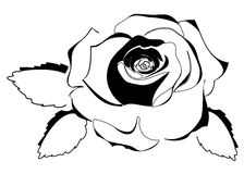 Rose Outline Stock Image
