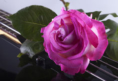 Rose over bass Royalty Free Stock Photos