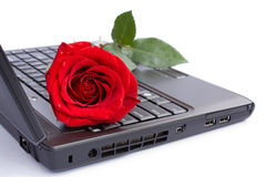 Rose over laptop. Single rose with water drops over laptop Stock Images