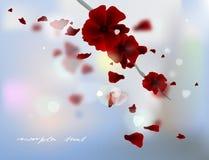 rose płatków Fotografia Royalty Free