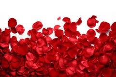 rose płatków Zdjęcia Royalty Free