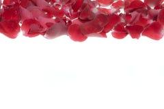 rose płatków royalty ilustracja