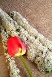 rose płatków Fotografia Stock