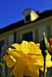 Rose at Palais Schönbrunn Stock Images