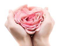 Rose in palms Royalty Free Stock Photo