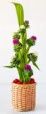 Rose pandanus Royalty Free Stock Images