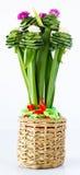 Rose pandanus Stock Photos