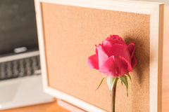 Rose with paper note Royalty Free Stock Images