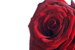 Rose par coeur - Rose rouge Image libre de droits