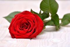 Rose para las tarjetas del día de San Valentín Foto de archivo