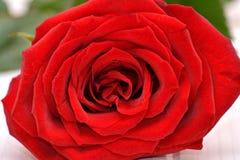 Rose para las tarjetas del día de San Valentín Fotografía de archivo libre de regalías