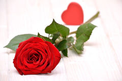 Rose para las tarjetas del día de San Valentín Foto de archivo libre de regalías