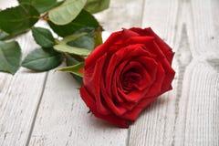 Rose para las tarjetas del día de San Valentín Fotografía de archivo