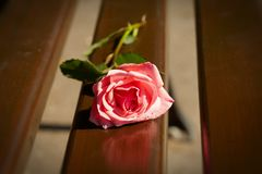 Rose on a park bench Royalty Free Stock Images