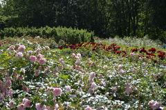 Rose park, Kadriorg park Catherine's Valley in Tallinn, Estonia Stock Photography