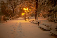 Rose Park timisoara. Rose Park winter night timisoara Stock Images