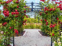 Rose passage in the park. Rose passage in full bloom during summer time. Public park - Beacon Hill Park in Victoria, British Columbia, Canada Royalty Free Stock Photos