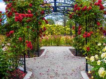 Rose passage in the park. Rose passage in full bloom during summer time. Public park - Beacon Hill Park in Victoria, British Columbia, Canada Royalty Free Stock Photo