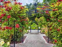 Rose passage in the park. Rose passage in full bloom during summer time. Public park - Beacon Hill Park in Victoria, British Columbia, Canada Stock Images