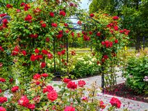 Rose passage in the park. Rose passage in full bloom during summer time. Public park - Beacon Hill Park in Victoria, British Columbia, Canada Royalty Free Stock Photography