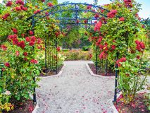 Rose passage in the park. Rose passage in full bloom during summer time. Public park - Beacon Hill Park in Victoria, British Columbia, Canada Stock Image
