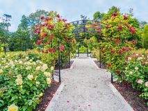 Rose passage in the park. Rose passage in full bloom during summer time. Public park - Beacon Hill Park in Victoria, British Columbia, Canada Royalty Free Stock Image
