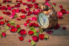 Rose passt der Liebe auf Stockfotografie