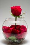 rose płatków Zdjęcia Stock